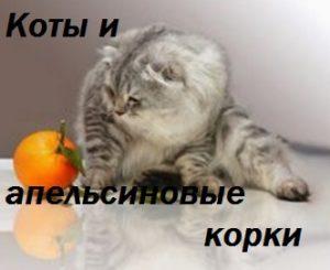 коты и апельсиновые корки - надпись на фото кота и апельсина