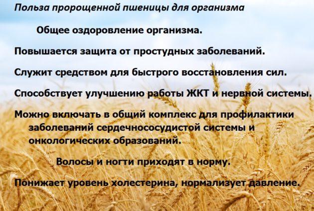 Список полезных свойств пророщенной пшеницы для организма