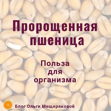 Рецепты и советы, как пророщенная пшеница помогает сохранить здоровье
